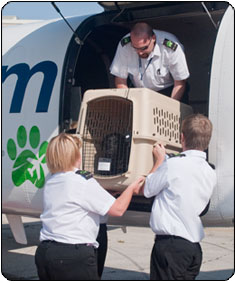 Pet Airways pet-attendants tend to a rescue mission